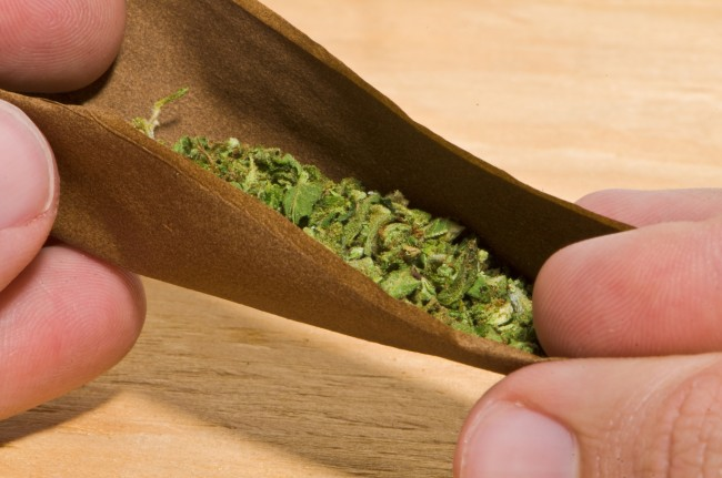 rolling a blunt with cannabis weed