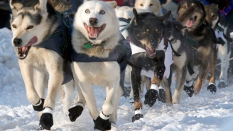 Leader Of The Iditarod Race Butt-Fumbled A 5-Hour Lead After Breaking A Rule They Teach You At Puppy School