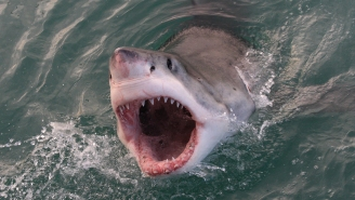 So Frickin' Many Great White Sharks Have Been Spotted Off Cape Cod This Week Before The 4th Of July