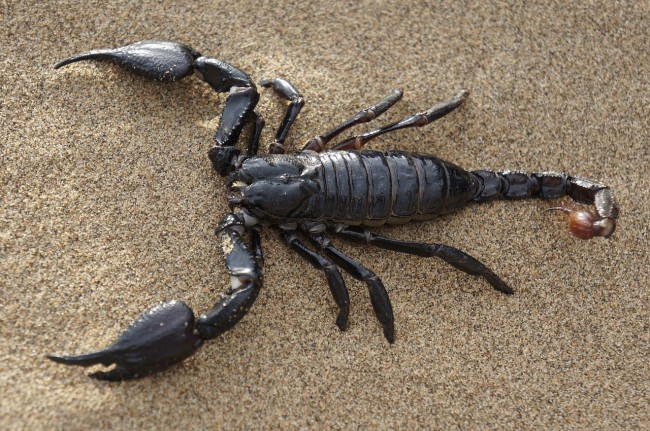 scorpion bites passenger on airplane flight