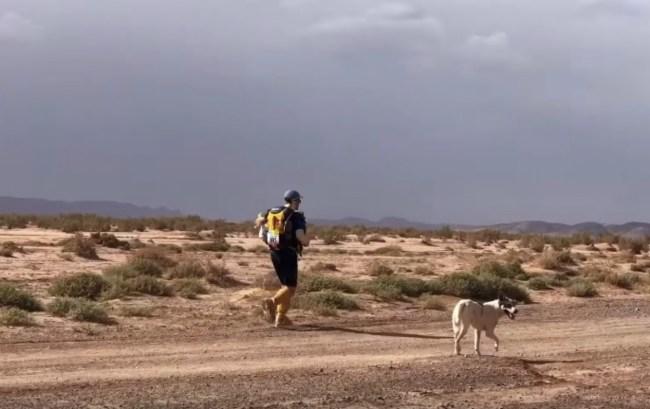 Cactus dog running ultra Marathon des Sables Sahara Desert