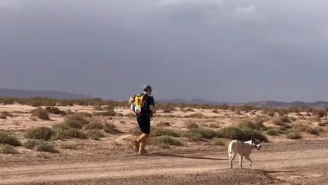 This Good Dog Completing A 6-Day, 140-Mile Marathon Across The Sahara Desert Is My Motivation