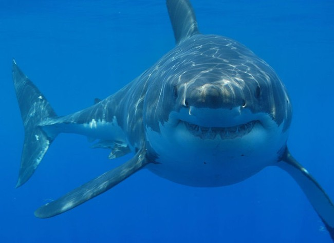 great white shark dies sea turtle mouth viral photo