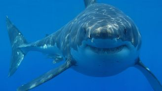 A Surfer Reportedly Beat A Great White With His Surfboard To Survive An Attack In Australia