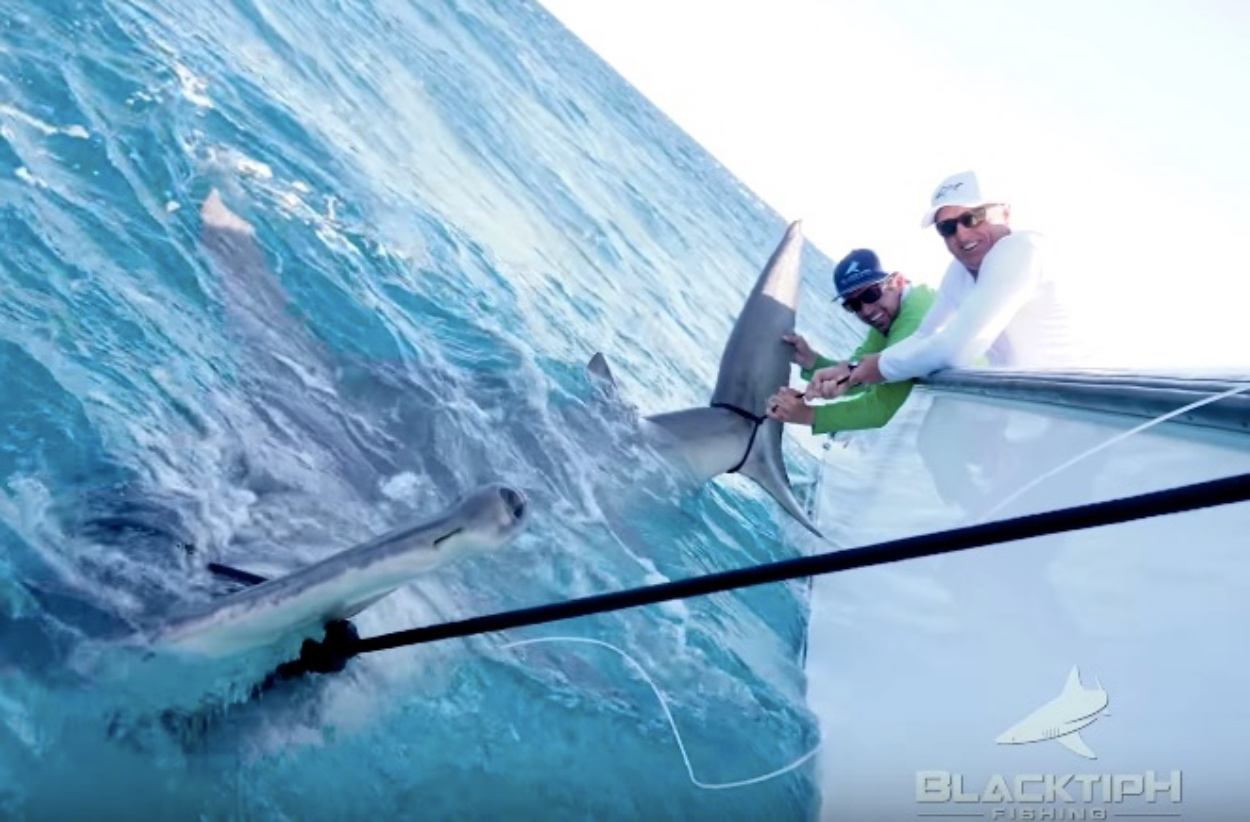Greg 'The Shark' Norman Caught A HUGE Hammerhead Shark That Measured Longer Than The Current World Record