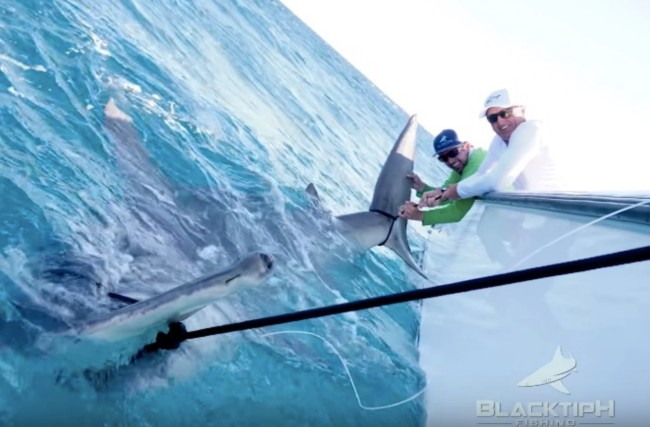 Greg Norman world record hammerhead shark