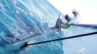 Greg 'The Shark' Norman Caught A HUGE Hammerhead Shark That Measured Longer Than The Current World Record