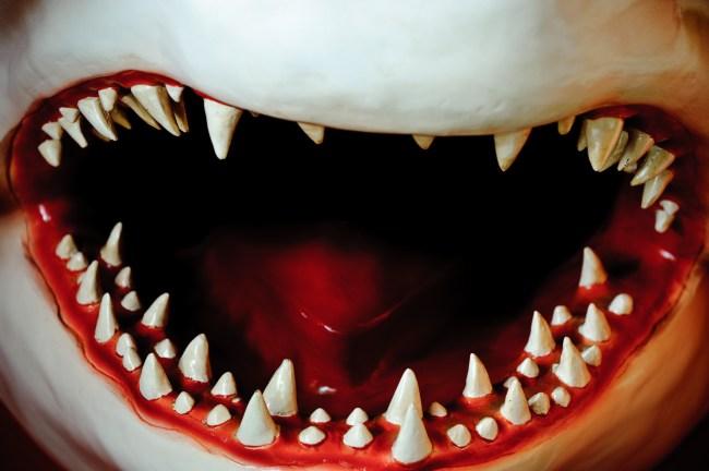 Great white shark teeth rendering