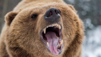 Poachers Who Illegally Killed A 400-Pound Bear On Private Property Have Been Hit With A Brutal Sentence