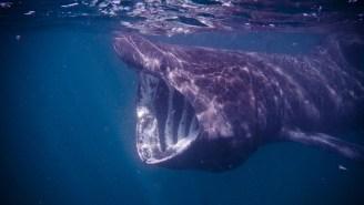 A Gargantuan 26-Foot Dead Shark Washed Up On A Beach In Maine