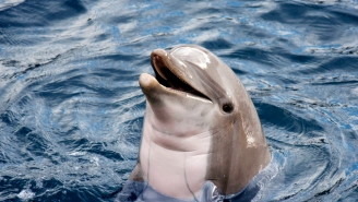 This Rare Footage Of A Dolphin Doing BACKFLIPS While Swimming Full Speed Is Incredible