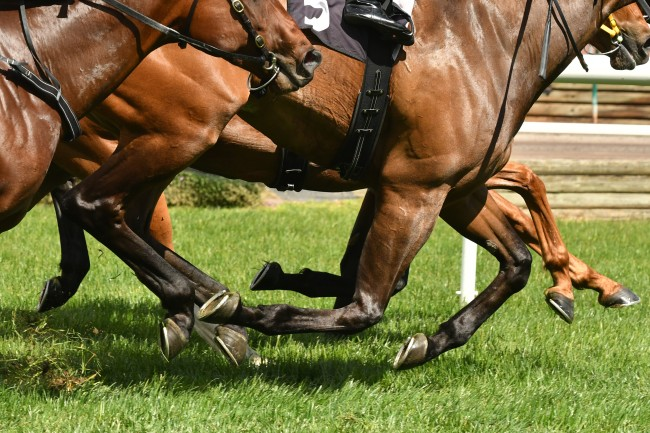 horse racing feet on turf