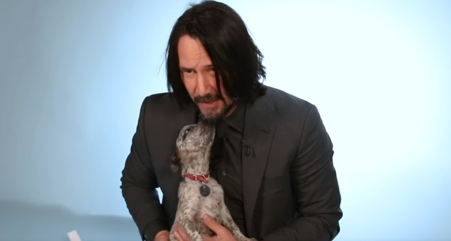 'John Wick' star Keanu Reeves answers questions while playing with puppies for BuzzFeed interview