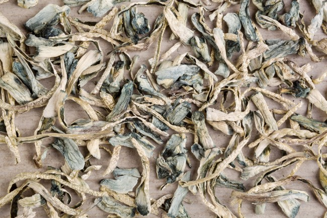 oakland decriminalizing psychedelic mushrooms