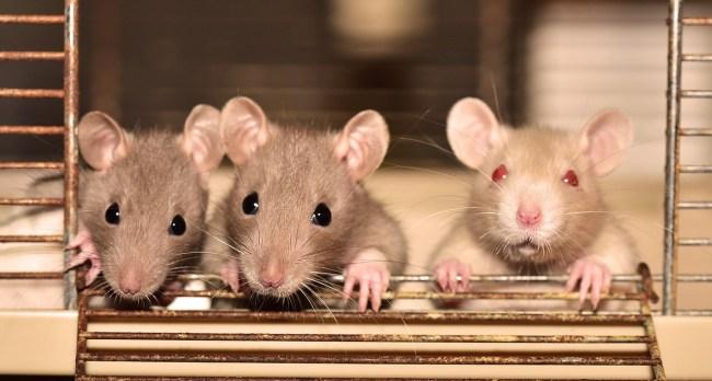 rat pop up bar san francisco