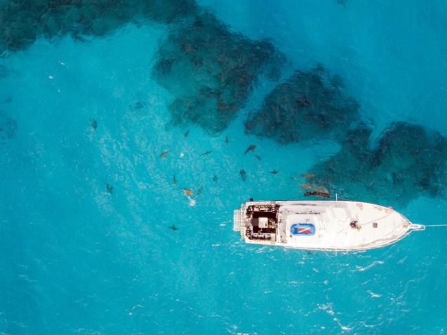 Sharks have killed a Southern California woman Jordan Lindsey who was vacationing in the Bahamas.