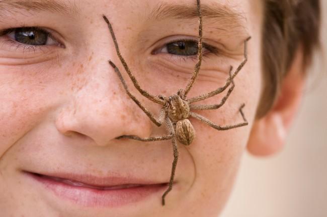 spider on boy's face