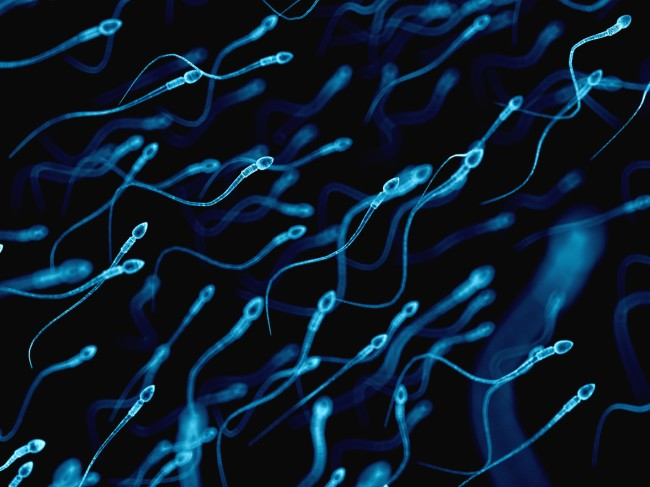 """A homeless 18-year-old in East Harlem is the latest to receive the sperm from a man who will be able to claim 50 babies in July, named the """"Sperminator"""""""
