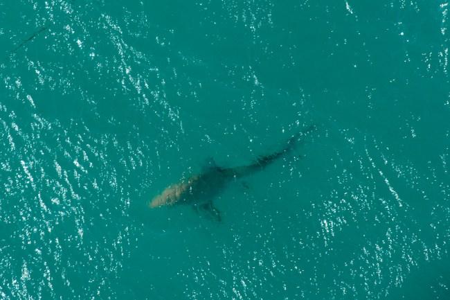 Video shows shark circling woman swimming at Panama City Beach