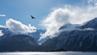 Photographer Snaps Unreal Photo Of Bald Eagle That Some Are Saying Is The Best Ever Taken