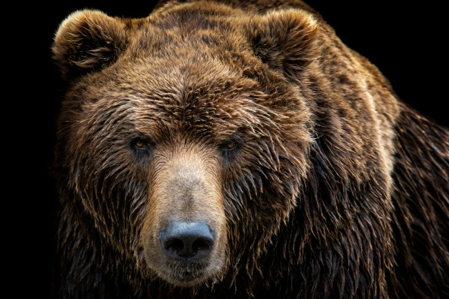 Russian man allegedly found alive in a bear's den a month after the beast attacked him and dragged him to its lair in SIberia and survived by drinking his own urine.