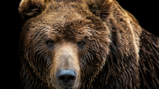 Man Reportedly Survived For A Month On His Own Urine After He Was Attacked By Bear And Dragged To Beast's Lair