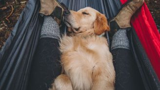 HEMP FOR DOGS: How Pup Science Joint + Probiotic + Hemp Oil Keep Your Favorite Pup Happy And Healthy