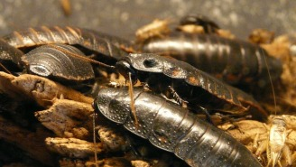 Cockroaches Are Starting To Become Immune To Insecticides As If We Didn't Already Have Enough To Worry About
