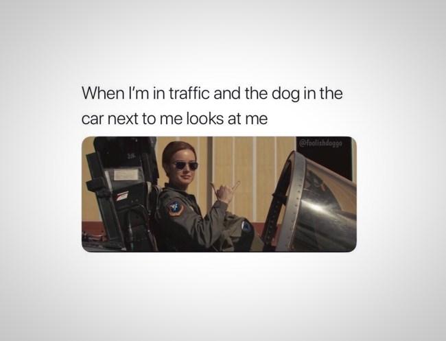 funniest memes traffic dogs joke