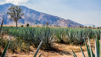 Celebrate 2019 International Tequila Day With These 10 Exquisite Tequilas