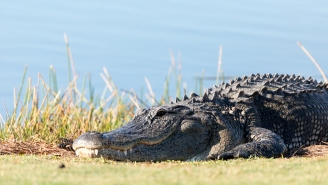 75-Year-Old Florida Man Rescues Dog From Explosive Alligator Attack By Channeling Inner Chuck Norris And Kicking Beast