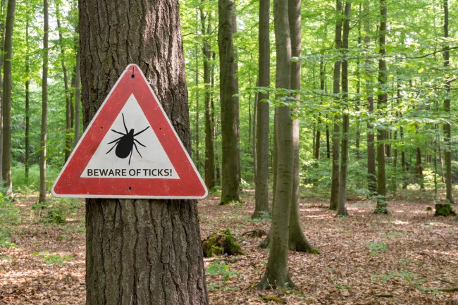 Book and report says Pentagon's Department of Defense may have released weaponized ticks into the wild and House investigating through the National Defense Authorization Act (NDAA)