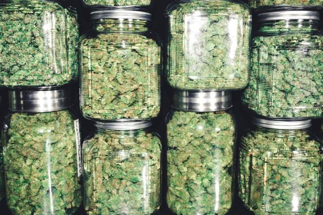 new york legalizing marijuana new strains