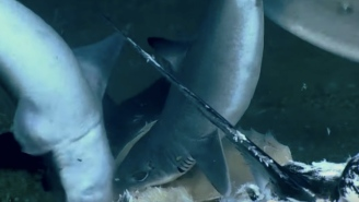 Scientists Film A WILD Deep Sea Feeding Frenzy And Holy SH*T That Shark Got Eaten Alive!