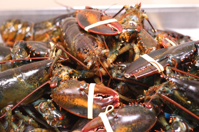 why are lobsters expensive