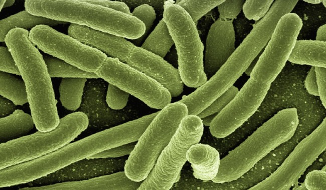 Bacterium Evolving Into New Superbug Resistant To Disinfectants