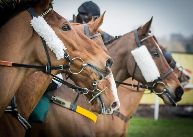 Horse Racing, Racing Horses