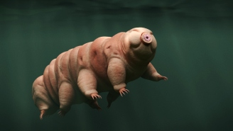 Lunar Lander Crashed On The Moon And Unleashed Thousands Of Tardigrades, The Most Resilient Animals Known To Man