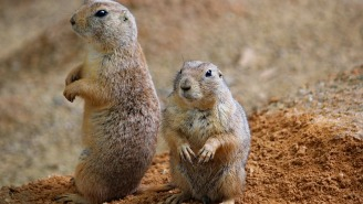 Phish Fans Are Scrambling To Find Places To Stay Thanks To Plague-Infected Prairie Dogs Invading Concert Campgrounds