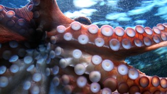 Woman Trying To Snag The Perfect Photo Puts An Octopus On Her Face, Ends Up In The Hospital
