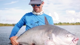 Dude Catches A Monster Catfish In The Mighty Mississippi River Using A Yellowfin Tuna Carcass As Bait!
