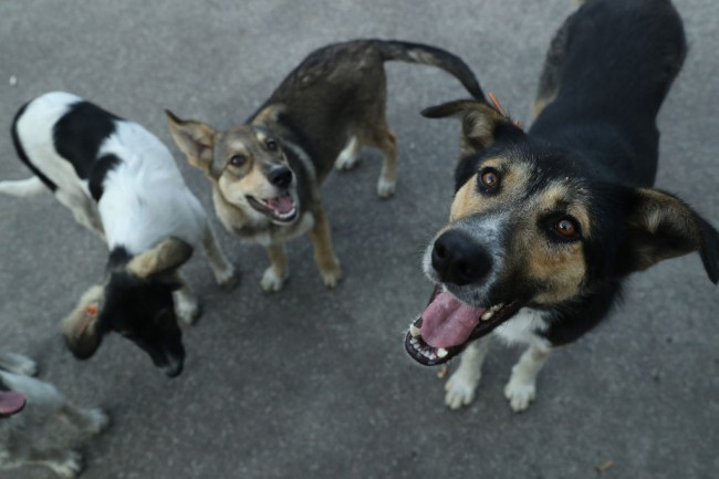 A woman in the Bahamas has sheltered nearly 100 stray and abandoned dogs inside her home to protect them from Hurricane Dorian.   Chella Philips, manager of The Voiceless Dogs of Nassau, Bahamas, has given shelter to 97 dogs at her house in New Providence.