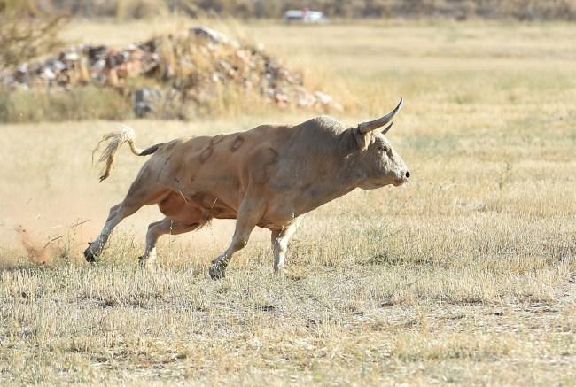 Fire sparks mass explosion of semen at cattle breeding center