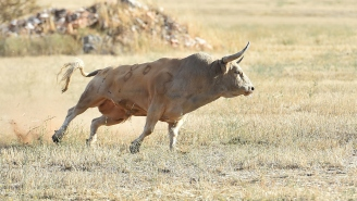 'Massive Explosion' Of Bull Semen A 'Huge Blow' As Wads Of Cash Lost