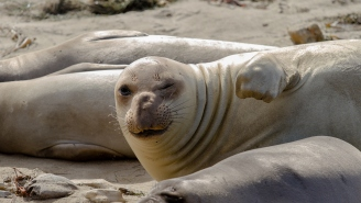 A Gigantic Seal Helped Police Apprehend An Alleged Drug Gang With $1 Billion Worth Of Meth, Cocaine, And Ecstasy
