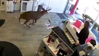 Huge Deer Jumps The Window Of A Long Island Salon And Completely Destroys The Place While Everyone Panics