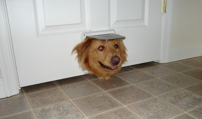 dog stuck in doggy door