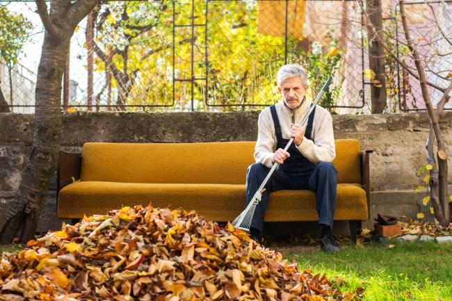 Do I Need To Rake Leaves