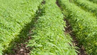 California Authorities Destroy 10 Million Marijuana Plants Worth $1 Billion
