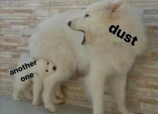funniest dog memes of 2020